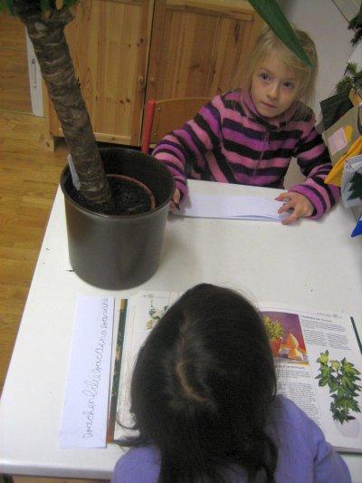 Biologie – Zimmerpflanzen – Bestimmung der Pflanzenarten, selbstständige Recherche mit Hilfe von Sachbüchern, Beobachtung und Pflege