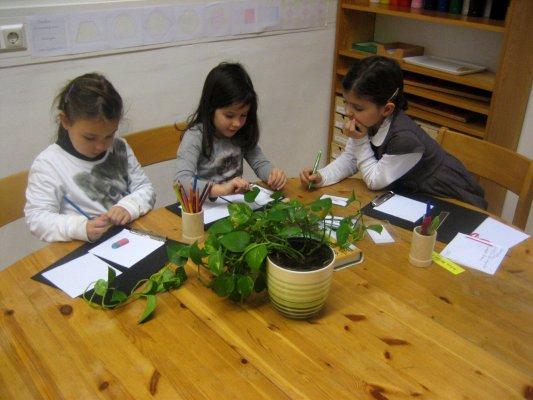 Biologie - Ziele: Bestimmung der Zimmerpflanzen, Blattformen unterscheiden, Schreiben und Zeichnen