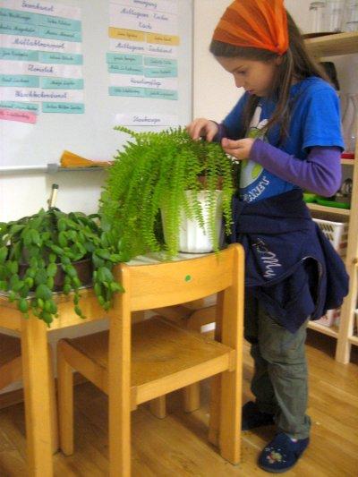 Biologie - Pflege der Zimmerpflanzen - Ziele: Sinnliches Erfahren von Pflanzen und Pflanzenteilen, Vielfalt und Bedürfnisse der Pflanzen wahrnehmen