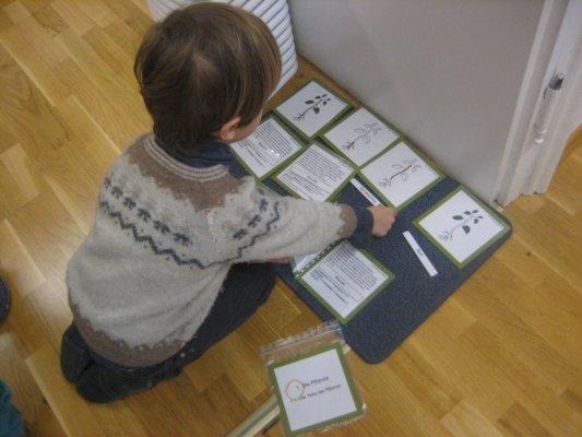 Biologie - Botanik - Arbeit mit den Definitionsheften