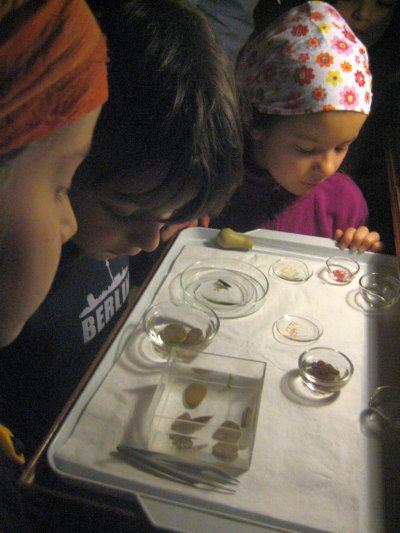 """Biologie: Mikrotheater im """"Naturhistorischen Museum"""""""